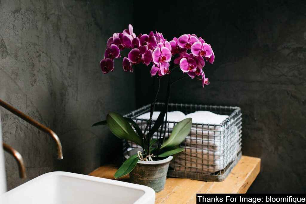 Orchids plant in the bathroom