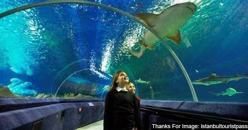 Sea Life Aquarium in Bayrampasa Istanbul best Place Istanbul