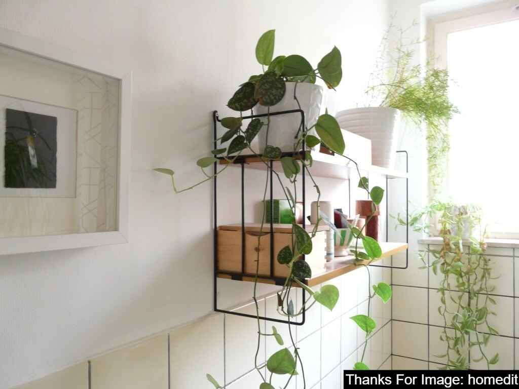 Bathroom Plants on shelves